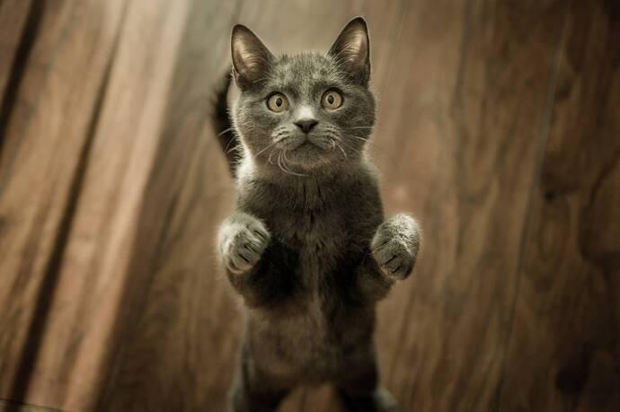 A strange looking black cat