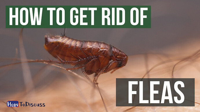 how to get ride of fleas